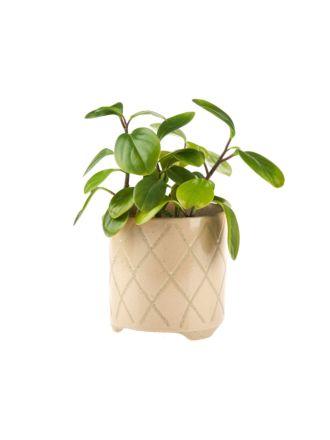 Estrada Caramel Planter Pot 12cm