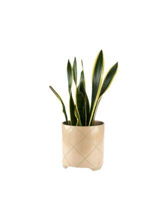 Estrada Caramel Planter Pot 24cm