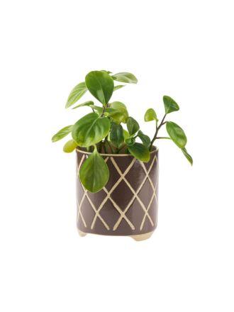 Estrada Coffee Planter Pot 12cm