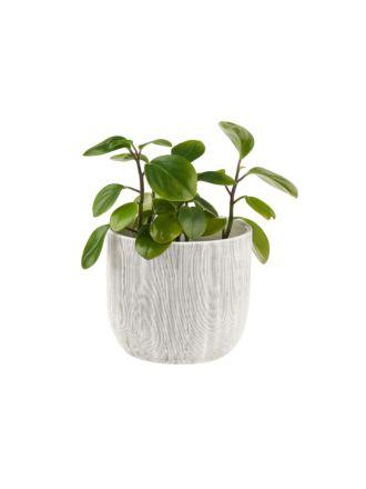 Taupin Planter Pot 19cm