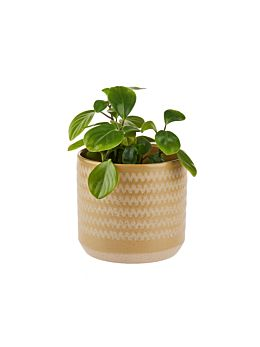 Dawn Planter Pot 20cm