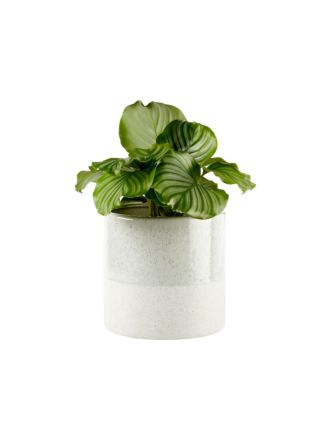 Caitlin Green Planter Pot 24cm